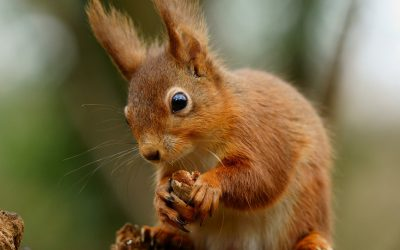 National Squirrel Day